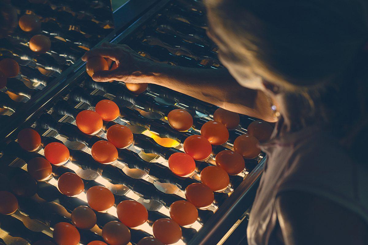 Local Egg Production - Inspection - Five Acre Farms