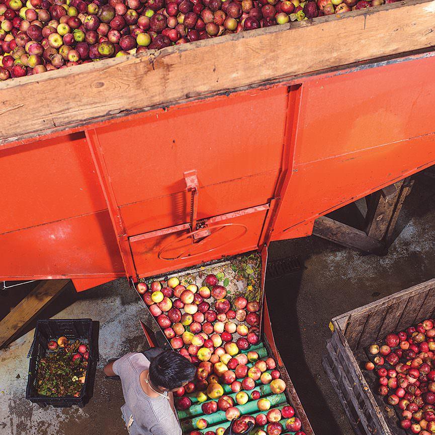 Apple Cider Pressing - Five Acre Farms