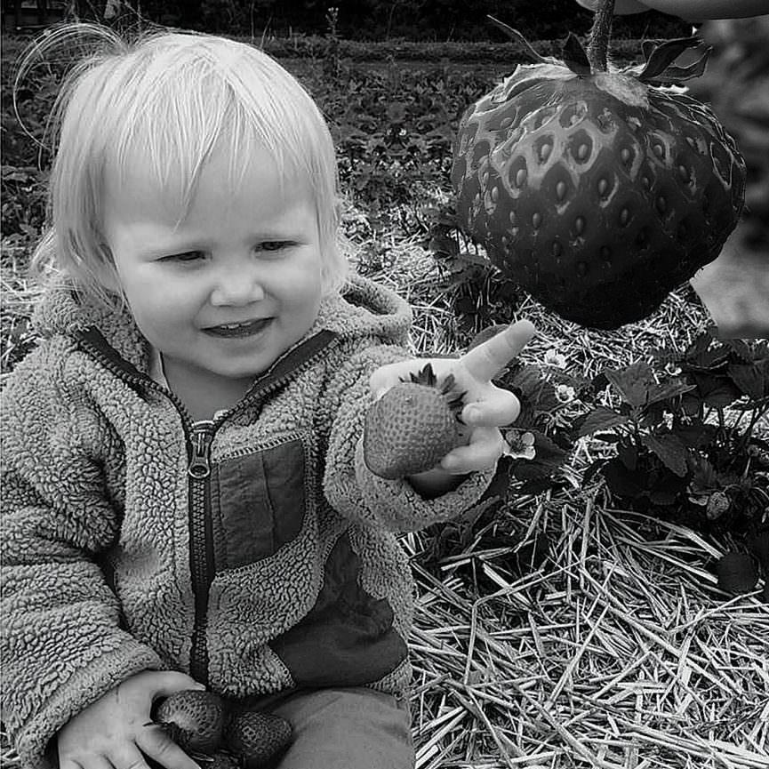Jake's daughter Mackenzie helping dad pick some strawberries