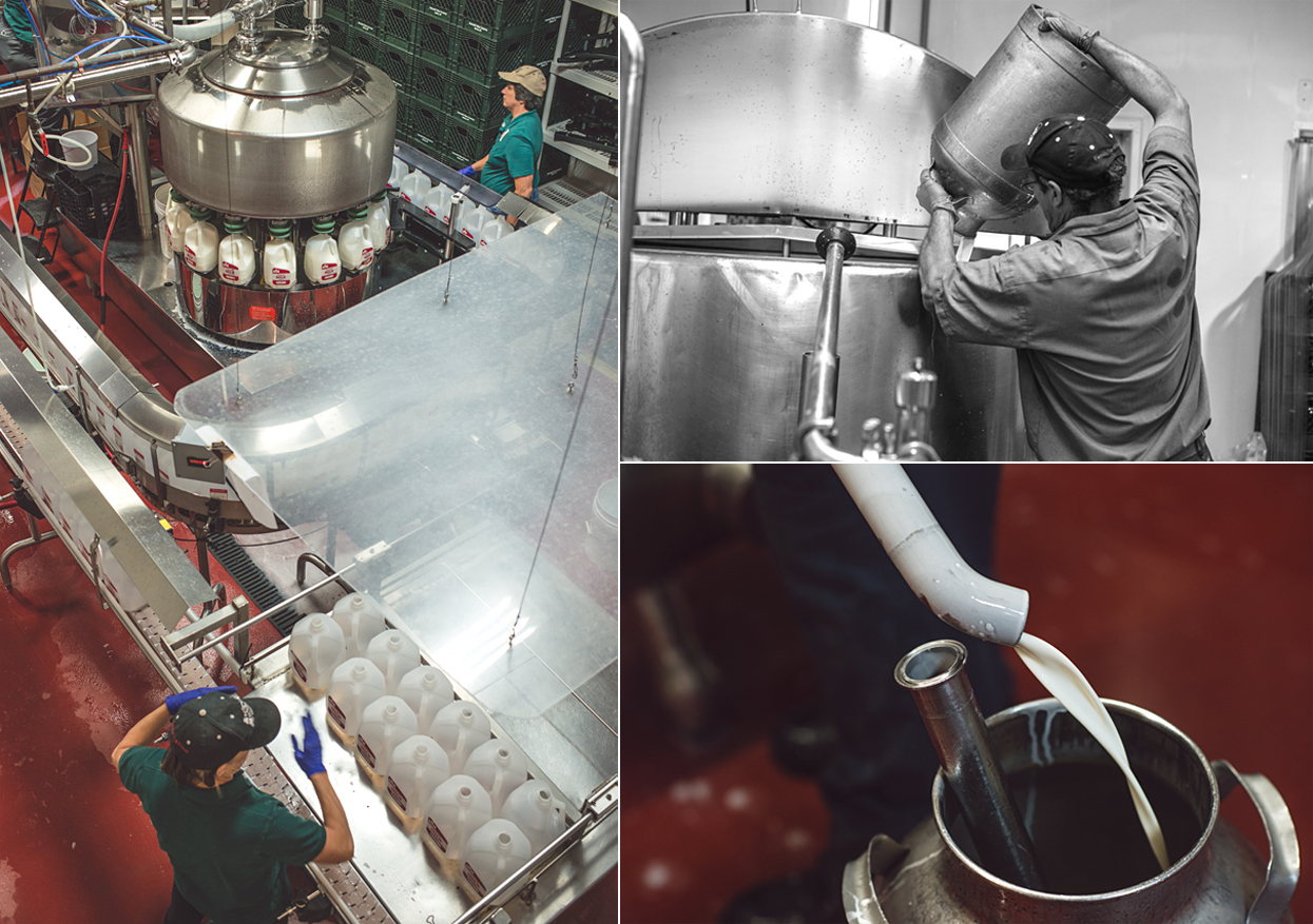 Clockwise: Bottling gallons of Five Acre Farms Whole Milk. Jim working the cream seperator. Milk and jug.