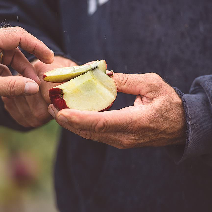Tasting Macs for peak ripeness
